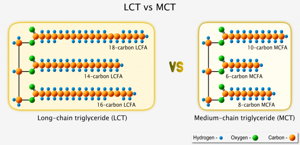 Size of long-chain triglyceride versus medium-chain triglyceride