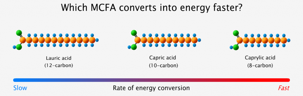 Rate of energy conversion of medium-chain fatty acids