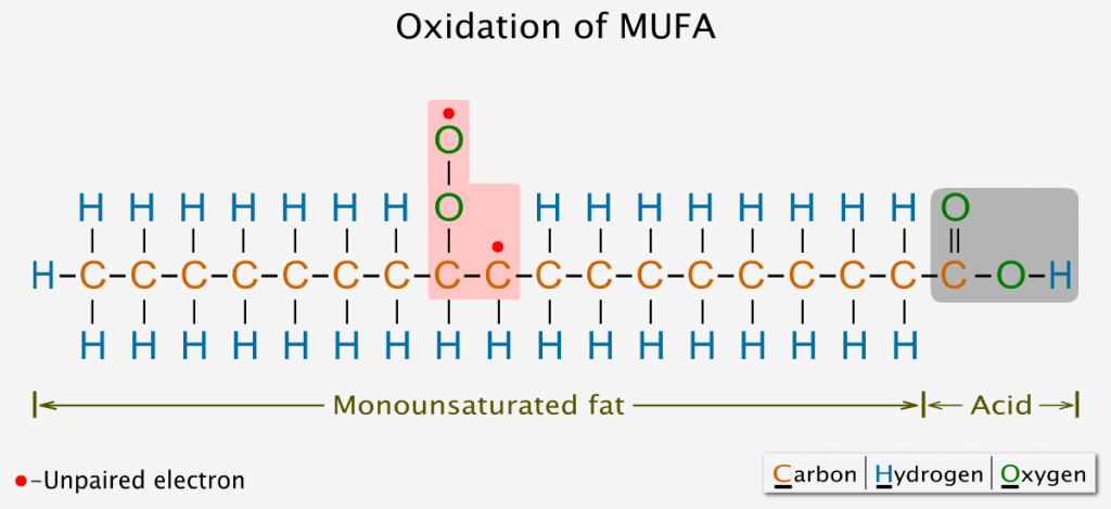 Oxidation of monounsaturated fatty acid
