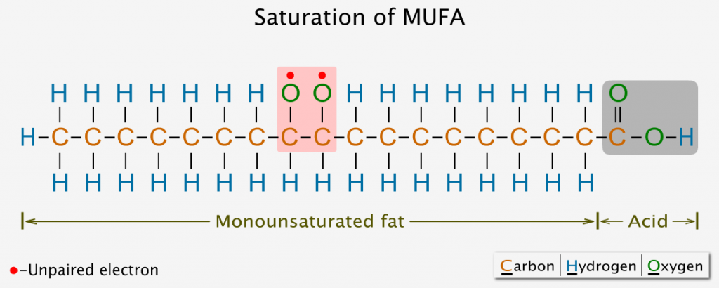 Saturation of monounsaturated fatty acid