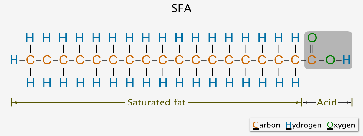 Saturated fatty acid chemical structure