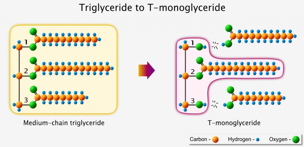 Triglyceride converts into T-shaped monoglyceride