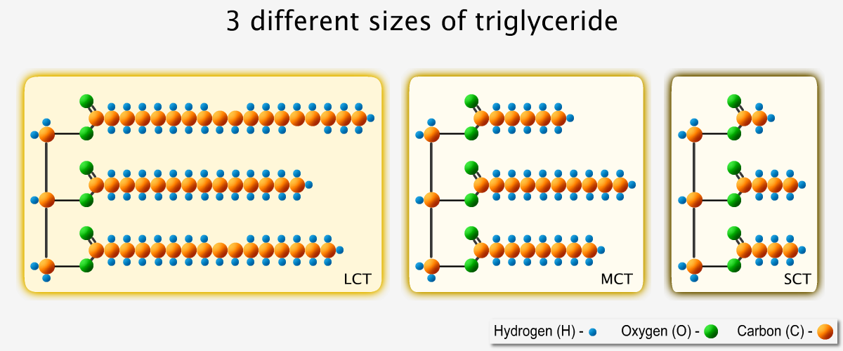 3 Different Sizes of Triglyceride